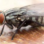 fly-control-pest-control-uae